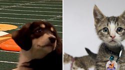 It's The Puppy Bowl vs. Kitten