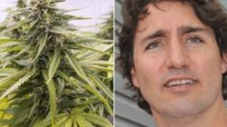 Tory MP Attacks Trudeau 'Pot