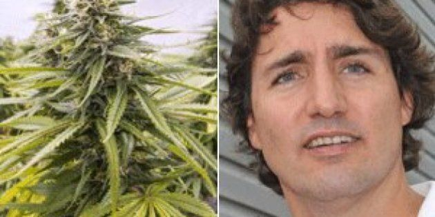 Conservative MP Williamson Attacks Trudeau's 'Pot