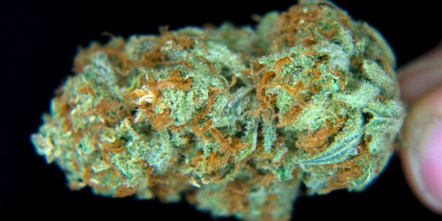 A medical-marijuana bud, or flower as it is also known, is displayed for a photograph at ARC Healing...