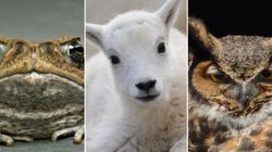 Alberta Animals Being Threatened By Climate