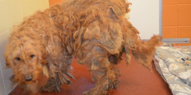 B.C. SPCA Seizes 18 Animals From Clearwater