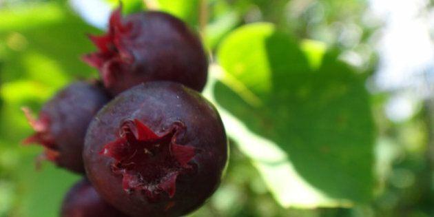 Mmmm .... Best berries ever !!!