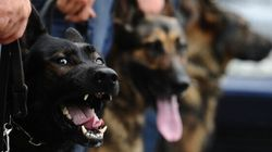 Dog Bites Top List Of Police-Related