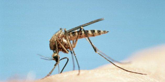 Mosquito Viruses Are a Biting Concern for