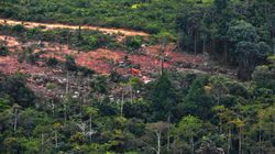 The Hefty Price We're All Paying For Deforestation in