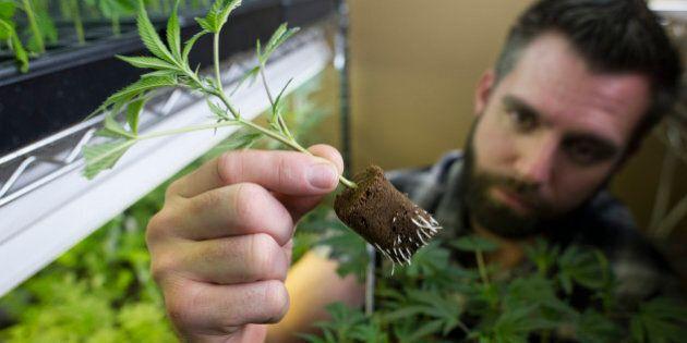 Douglas Chloupek, co-founder and chief executive officer of MedMar Healing Center, a medical-marijuana...