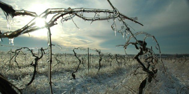 Polar Vortex Claims Another Victim: Ontario