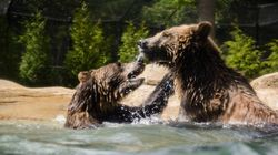 Grizzlies Given A Lovers'