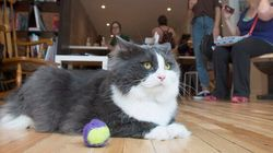WATCH: Cat Cafe Opens In