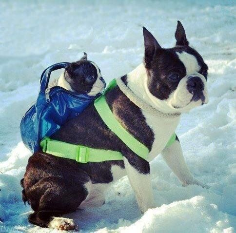 The 49 Most Canadian Dogs On The