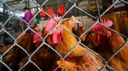 Illegal Bird Market Could Be To Blame For Canadian's Fatal H5N1