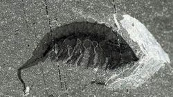 Fossils Found In B.C. Could Help Explain