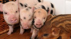 Surprisingly Cute And Unusual Pets (And Where It's Legal To Own