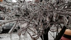 Watch The Trees, And Other Ice Storm Safety