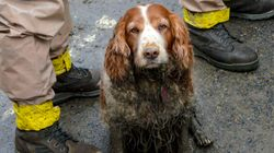 Tireless Dogs Search For Mudslide