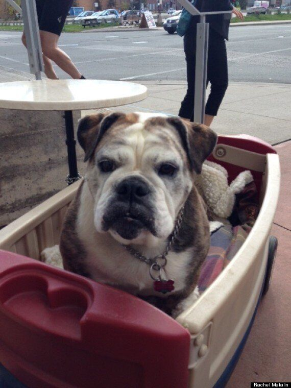 What My Bulldog And A Wagon Taught Me About