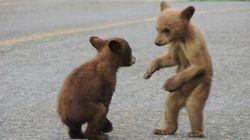 LOOK: Un-bear-ably Adorable