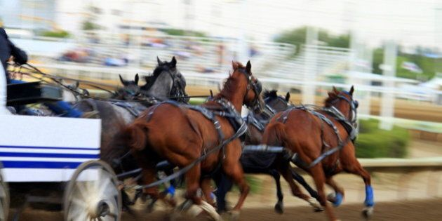 Horses racing at the chuckwagon race on Day 1 in Calgary Stampede