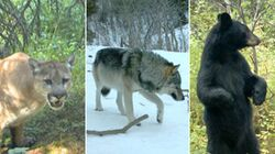 LOOK: Elusive Wildlife Moments Caught On