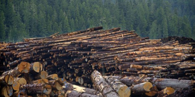 Canada Largest Contributor To Deforestation Worldwide: