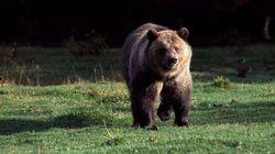 Bear Hunter Shot