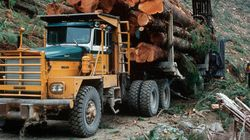 B.C. First Nation Hands Eviction Notices To Logging
