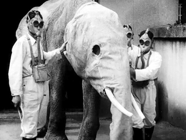 朝日新聞社が制作した子ども向けニュース映画「アサヒホームグラフ」の一場面。防毒マスクを着けさせられてゾウ舎を出るインドゾウの「ダンチ」=1940年ごろ