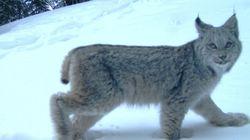 LOOK: Wild Animals Make The Best Of