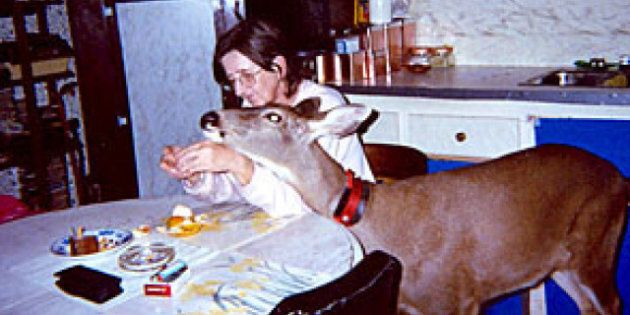 Bimbo The Deer, Ucluelet Owner Can Live Together: BC
