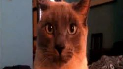 WATCH: Autotuned Plea To Find Missing Kitty Is Funny,