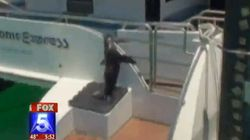 WATCH: Seal Jumps On Boat, Holds On For Dear