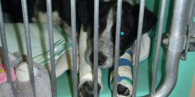 William Daniel Goyette Puppy Attack Allegations Net Alberta Man Animal Cruelty