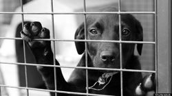 Quebec Named 'Best' Province To Abuse Animals By