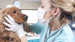 Could Dogs Be A Diabetic's Best