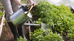 When To Water Your Plants: Should You Garden In The Morning Or