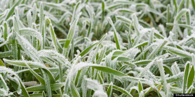 close up of frozen grass blades