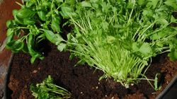 Get Growing Herbs -- For Your Health And Your