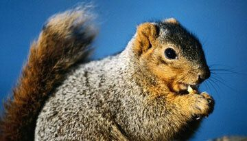 Nuts and Seeds: More Than They're Cracked Up to