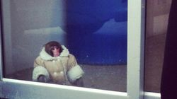 Ikea Monkey + Marc Jacobs =