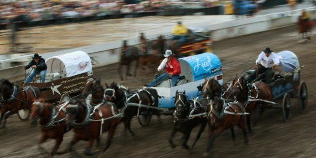 3 Calgary Stampede Horses Dead After Chuckwagon