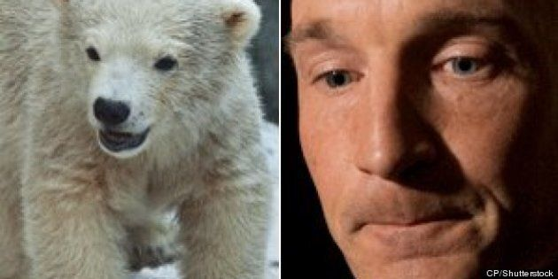 Ryan Leef, Tory MP, Slammed Over 'Shocking' Polar Bear