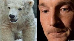 Tory MP Slammed For Polar Bear