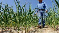 Hot, Dry Weather Has Farmers