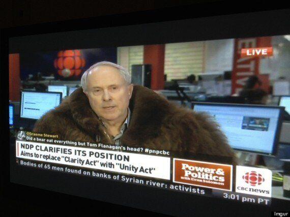 Tom Flanagan Wears Bison Coat On CBC; Hilarious Tweets Ensue