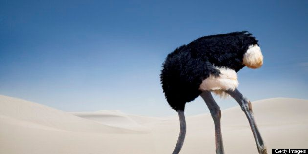 Ostrich burying head in the sand, Tsavo East National Park, Kenya, Africa