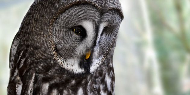 Calgary Zoo Grey Owl Death: Two Employees Disciplined After Owl Flew Into Gate And