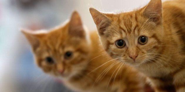 Windsor Dead Cats: 124 Deceased Animals Found In