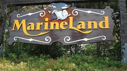 Marineland Owner Shot Dead Neighbours' Dogs: