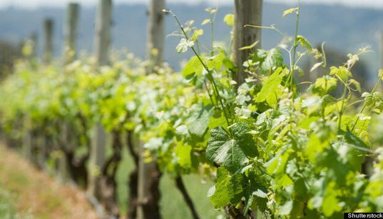 Backyard Decor: Plan To Use Vines In Unique